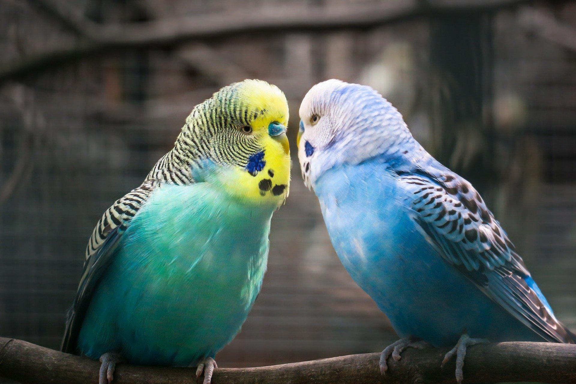 Mariage : quel régime matrimonial choisir?